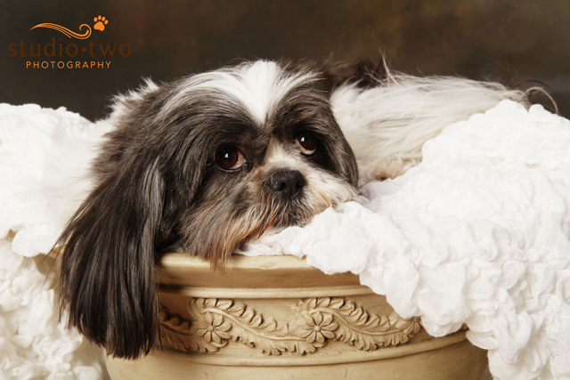 North Vancouver Dog Photography, West Vancouver Dog Photography, Dog Photography
