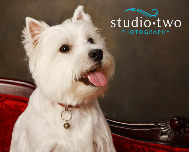 North Vancouver Dog Photography, West Vancouver Dog Photography, SPCA Dog Photography